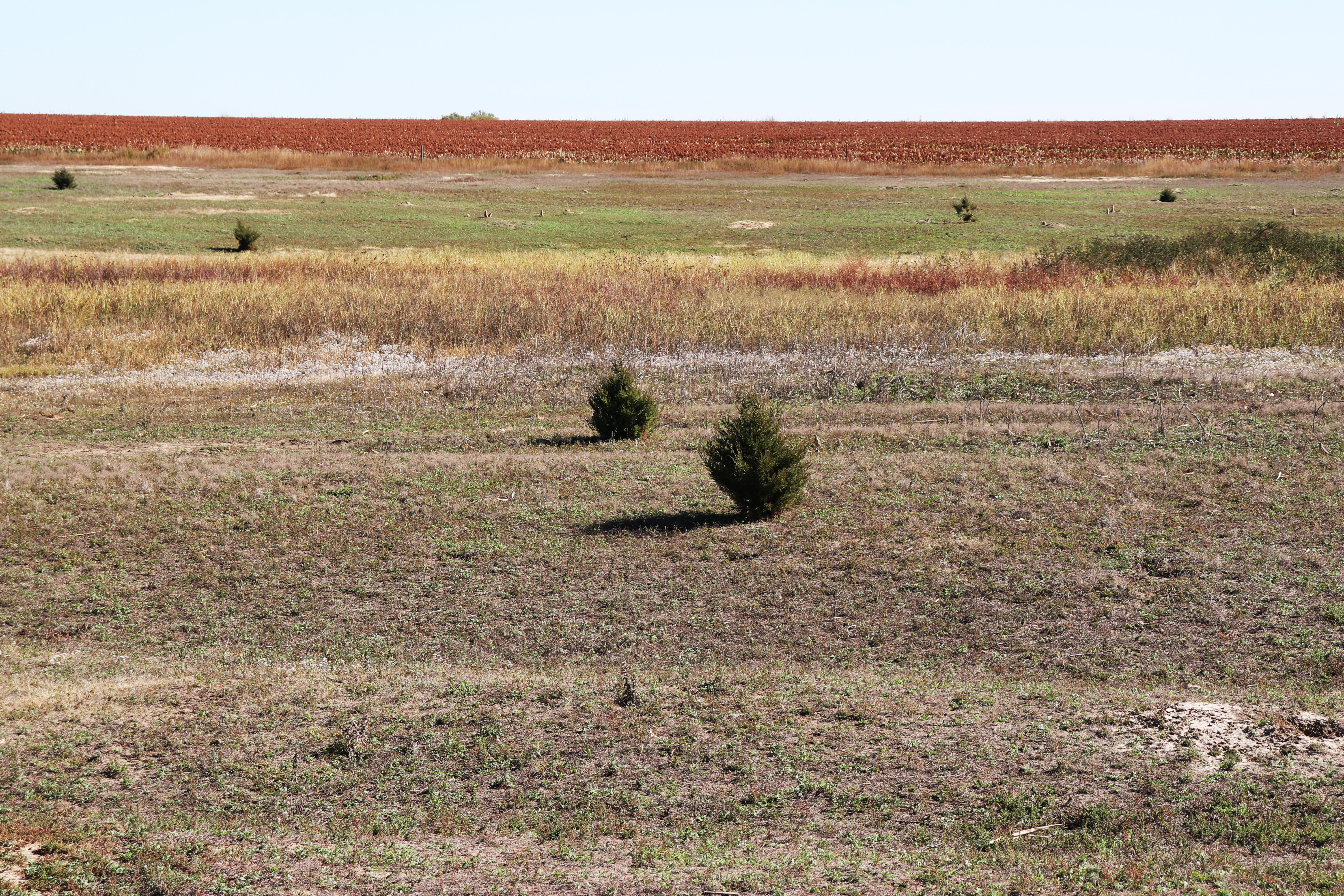 Santa Fe Trail swales (horizontal) and prairie dog colony (beyond tall grass) at Fort Larned National Historic Site.
