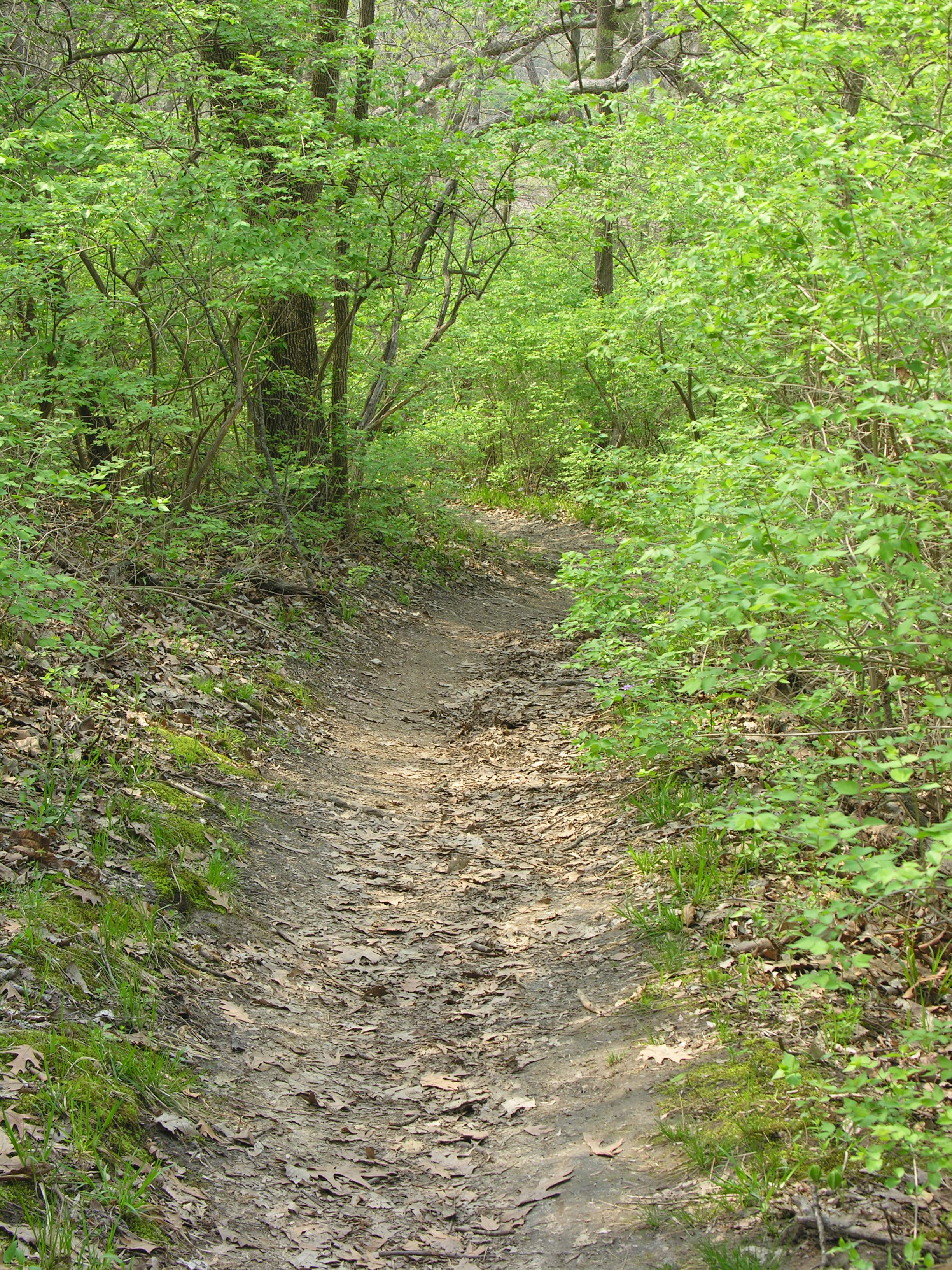 Trail through oak and hickory forest at Kaw River State Park.
