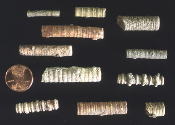 Stem fragments from assorted Pennsylvanian crinoid fossils.