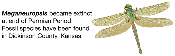 the end of the permian period Question 23 the end of the permian period was also the end of the ______ era precambrian paleozoic mesozoic cenozoic question 24 the ______ period ended in the greatest extinction of the phanerozoic eon.
